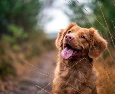 Seguros para mascotas: dales la máxima protección